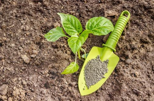 Nawożenie roślin latem – najważniejsze wskazówki