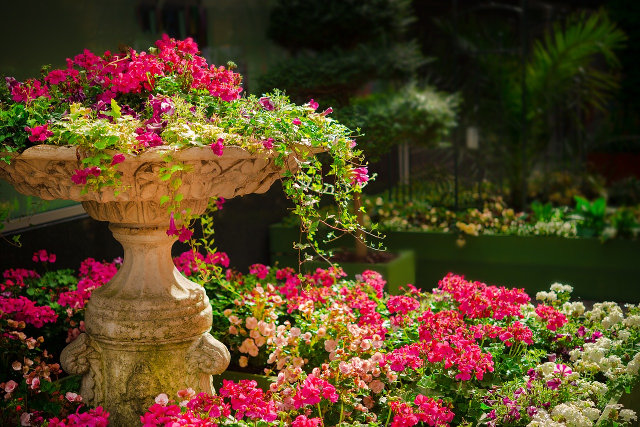 Zaprojektuj ogród marzeń